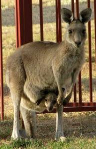 Kylie Griffin local wildlife